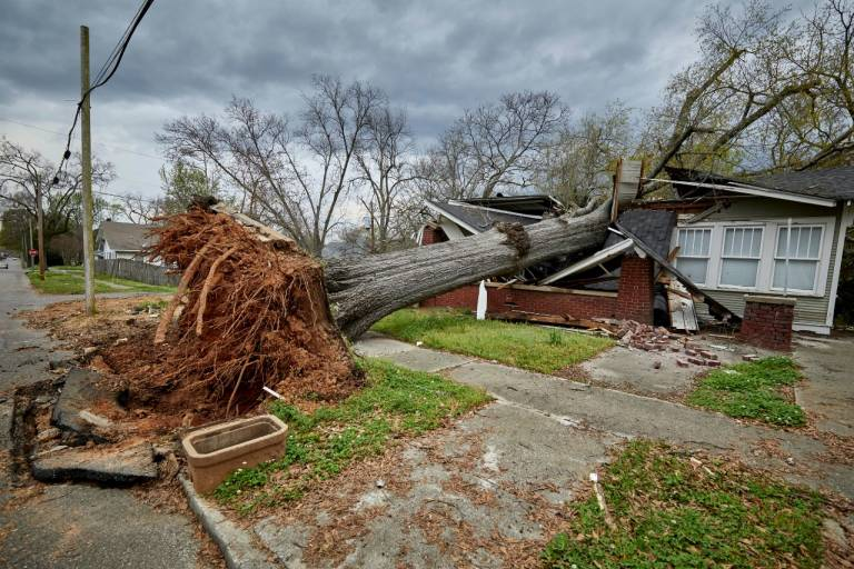 This large tree split this home in half near Birmingham, AL during the recent tornadoes