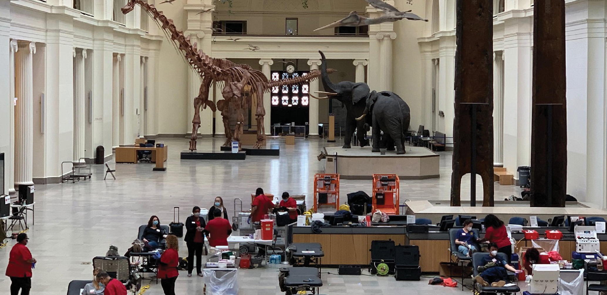 Views of artifacts and life-size elephants were on display during a recent blood drive at the Field Museum in Chicago, IL.