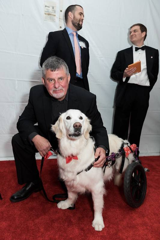 Metro New York North Red Cross Ball service dog
