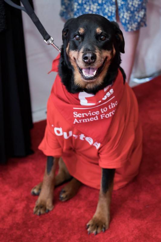 Red Cross Service to the Armed Forces therapy dog