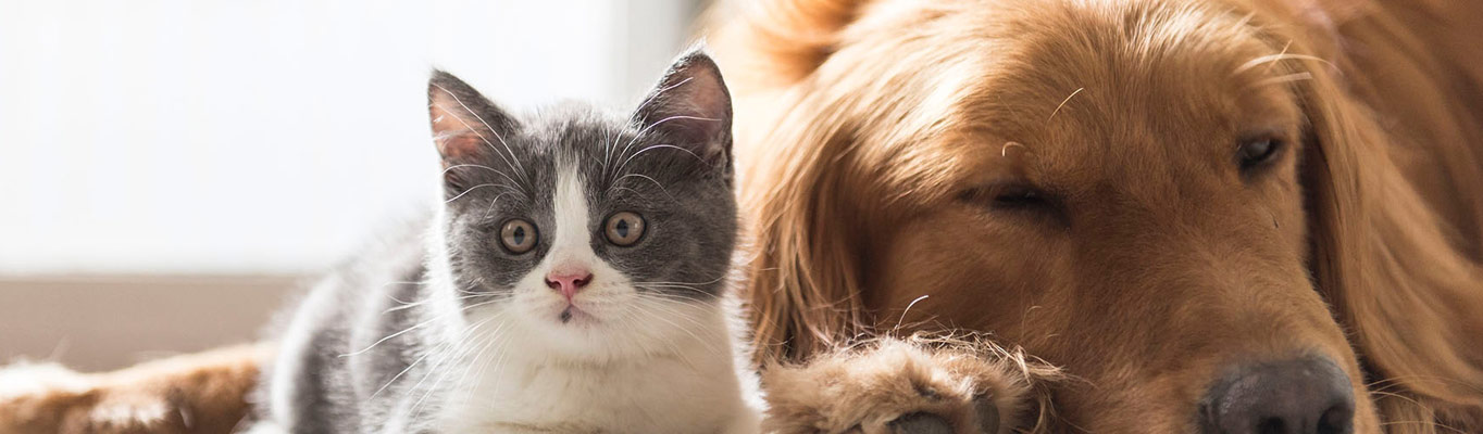 Cat & Dog First Aid Online Training