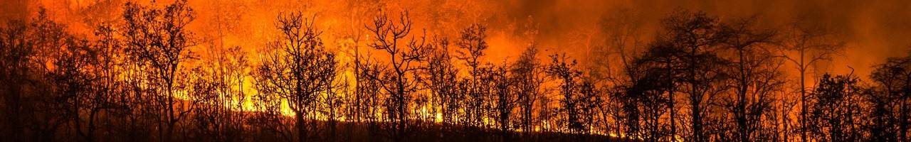 Trees burning in wildfire